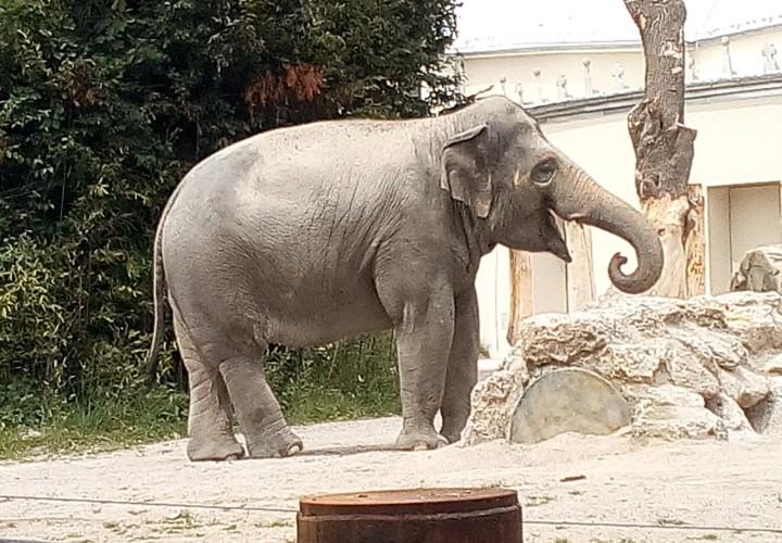 Münchener Tierpark Hellabrunn – Untergiesing-Harlaching Bild