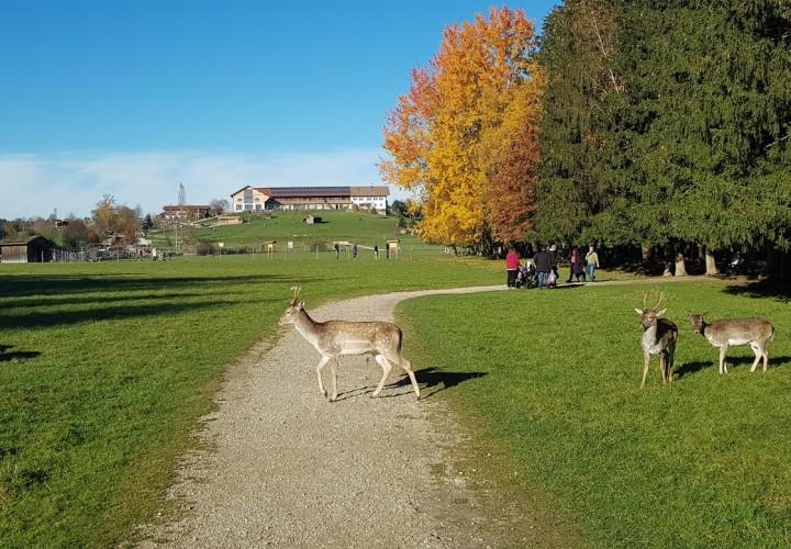 BergTierPark Blindham – München, Oberbayern Bild