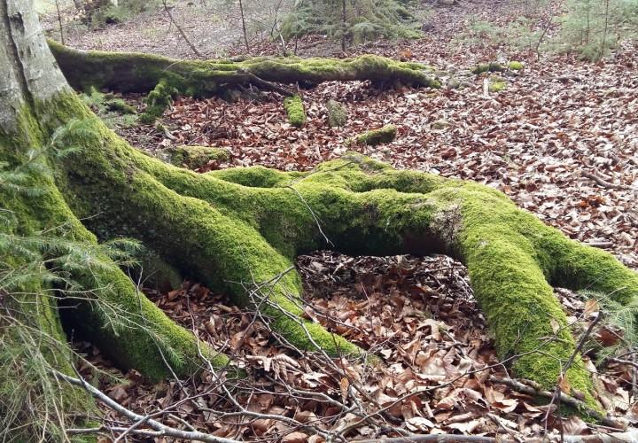 Ebersberger Forst, Hohenlinden Bild