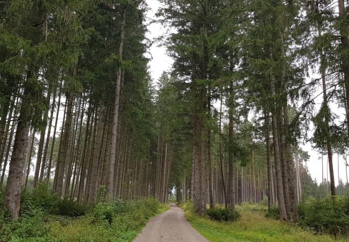 Hohenbrunner Rundwanderweg Bild