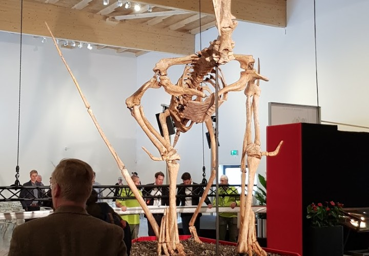 Dinosaurier Museum Altmühltal – Denkendorf, Eichstätt Bild