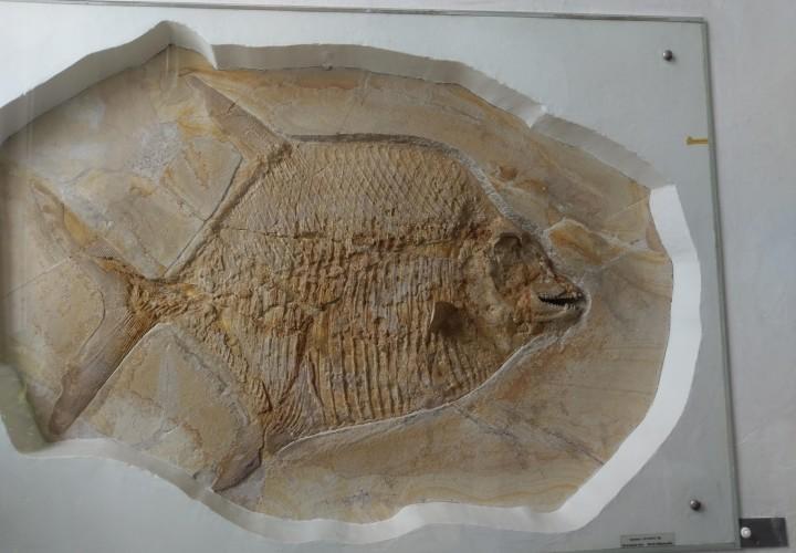 Palaeontological Museum, Munich – Maxvorstadt, München Bild