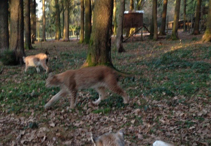 Wildpark Poing – Poing, Ebersberg Bild