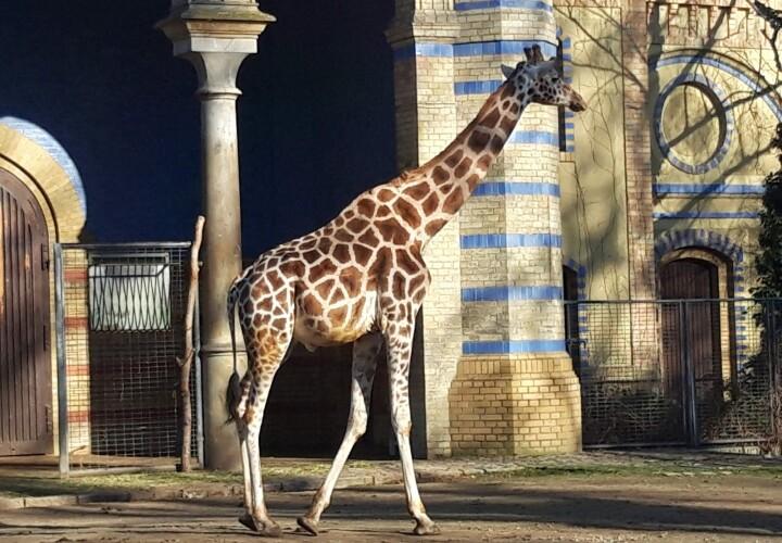 Zoologischer Garten Berlin Bild