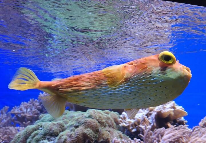 Aquarium – Köln, Kreisfreie Stadt Köln Bild