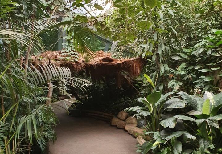 Urwaldhaus Bild